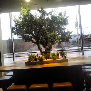 Olivträdet. Så vackert!