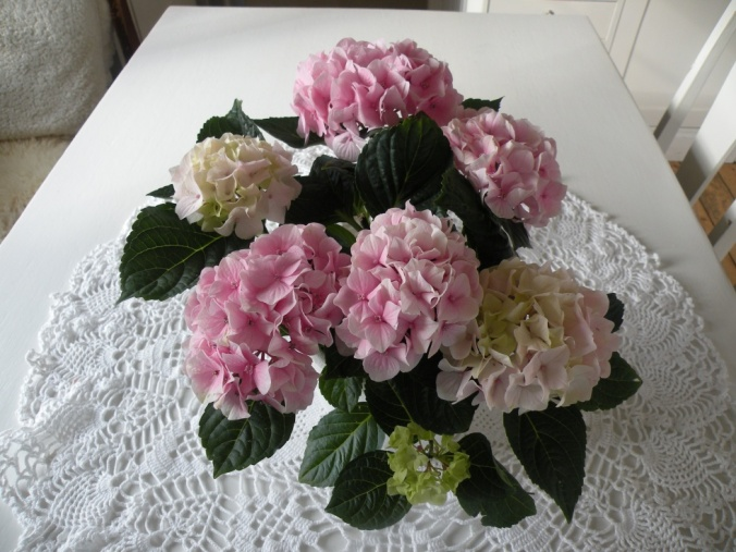 En vacker hortensia