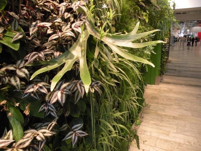 Ett Älghorn mitt i växtväggen