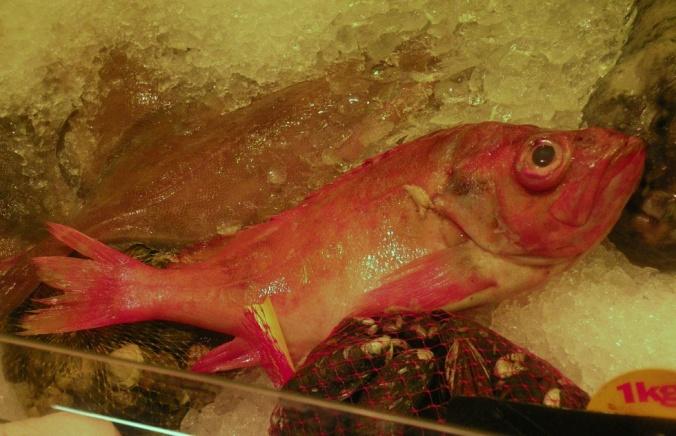 Kungsfisk. Också kallad Uer