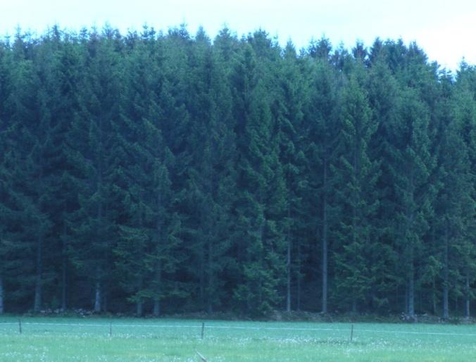 Granskog! Inget slår den naturupplevelsen