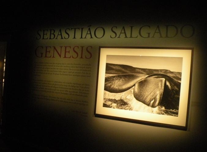Genesis. Utställning av Sebastiao Delgado.