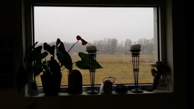 Typisk västkustvinter utanför fönstret.