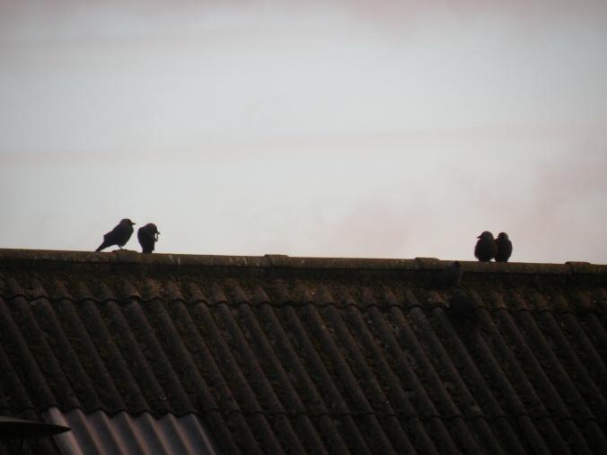 Småprat på tak