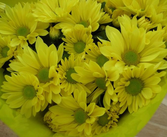 Chrysanthemum. Kryss! Sensommarkyss!