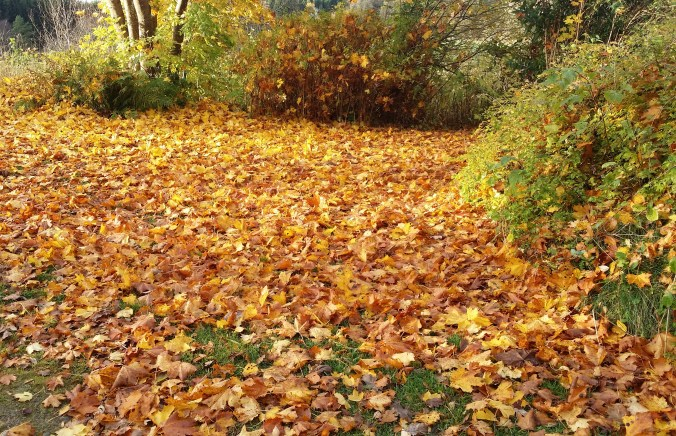 Löven har fallit
